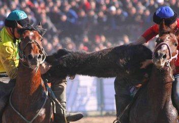 Закон о защите животных – запретят ли проводить национальные виды спорта