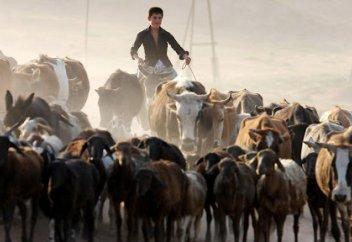 Разные: Казахстан на 55 месте из 61 по борьбе с изменениями климата