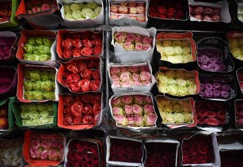 Почти 4 тысячи эквадорских цветов уничтожили в Казахстане