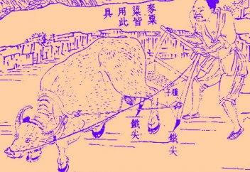 Крупные фермы в Китае оказались экологичней мелких