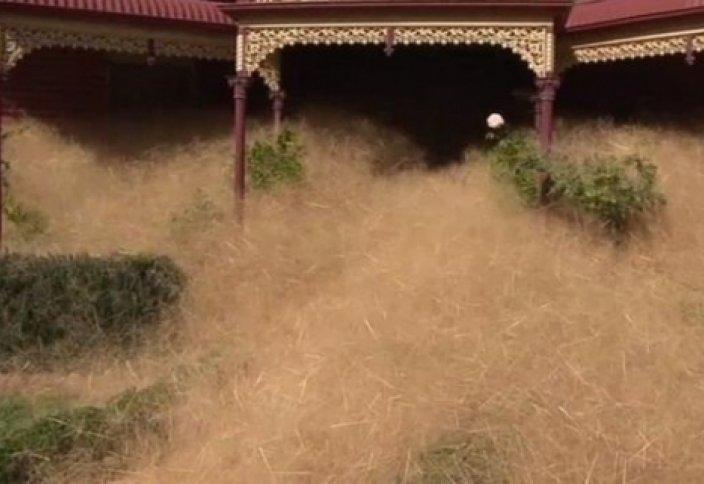 Avstralïya jerіn qaptağan aram şöp kesіrіnen jurt üyden şığwdan qaldı (vïdeo)