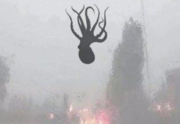 Дождь из креветок и осьминогов прошел в китайском городе (ВИДЕО)