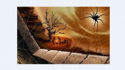 Что в Коране говорится о пауке?