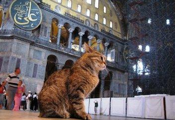 Эксперимент. Любимое животное пророка Мухаммада — лучший друг человека