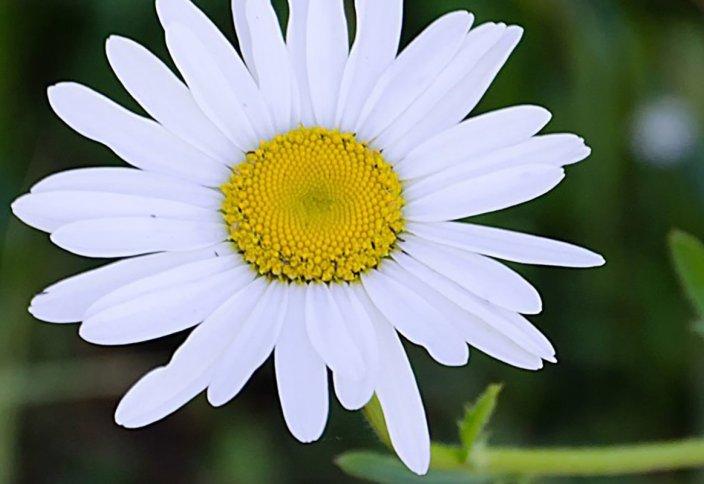 Цветок Пророка ﷺ - Фатима رضي الله عنها (первая часть)