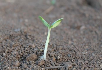Разные: Как почва самоочищается от загрязнения
