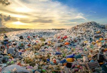 Сколько пластика каждый день попадает в организм человека. Ученые подсчитали размер пластика, который могут проглотить животные