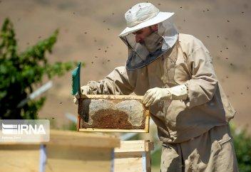 Разные: Иран является четвертым по величине производителем меда в мире