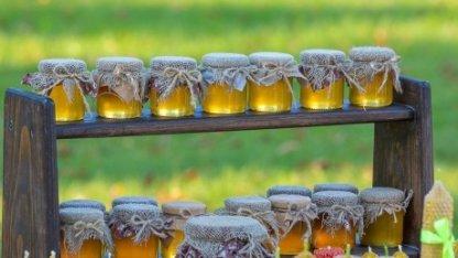 Как выбрать натуральный мед. Советы казахстанского пчеловода