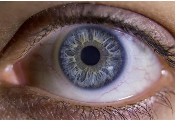 Болашақ медицинасы: көз торының ақуызы өздігінен қалай қалпына келеді