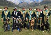 """""""Итбегілік"""" хотят признать официальным видом спорта в Казахстане. Борзые породы тазы на грани вымирания в Казахстане (видео)"""