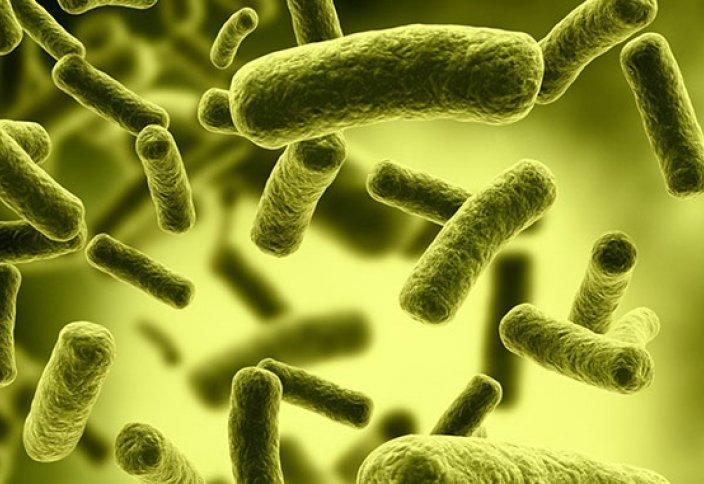 Бактерияның антибиотикке төзімділігі артуының тағы бір сыры ашылды