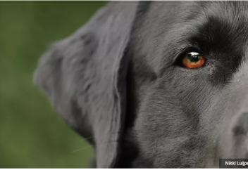 Полицейских собак научили находить телефоны и флешки. Служебных собак научили вынюхивать педофилов