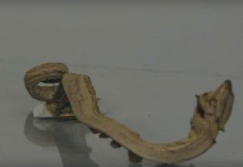Фараонова змея: термическое разложение роданида ртути