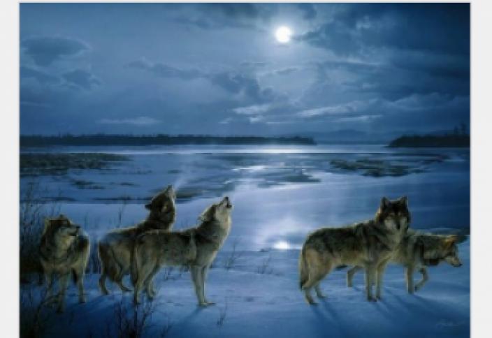 Волки окружают! Чем это грозит нам?