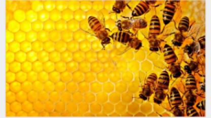 Что будет с человечеством, если вымрут пчелы