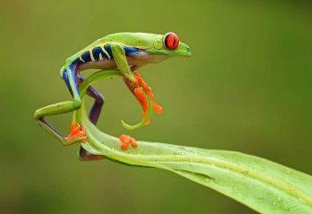 На юго-западе Китая открыли сразу пять новых видов лягушек
