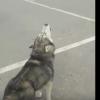 Намаз уақытында көшеде азан шақырған ит жұртты таңғалдырды (видео)