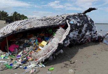 Более 40 кг полиэтиленовых пакетов обнаружены в желудке мертвого кита