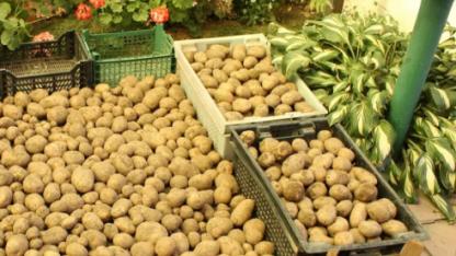 Убираем картошку на хранение