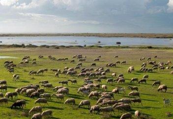Төрт бірдей ауыл халқы жайылым жерінің Өзбекстанға өтуіне қарсы наразылық білдірді (Видео)