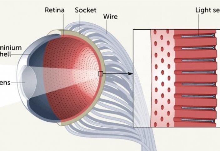 Китайские ученые создали бионический глаз, который превосходит живой аналог