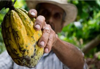 Как биомаркеры какао-бобов помогут избавиться от детского труда