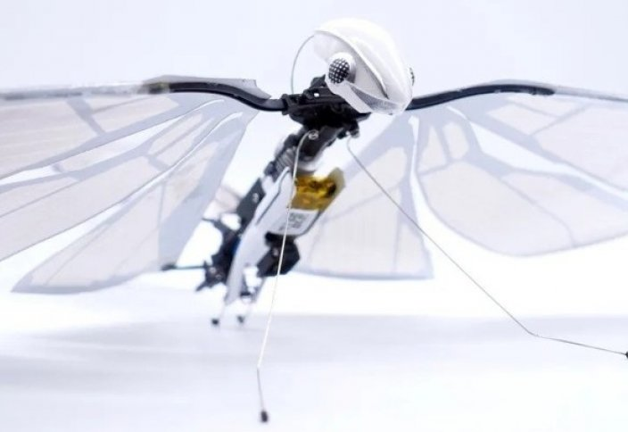 MetaFly: представили летающий робот-стрекозу (видео)