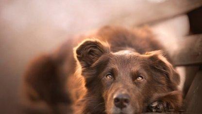 Можно ли держать собак в Исламе? | Ислам Sound