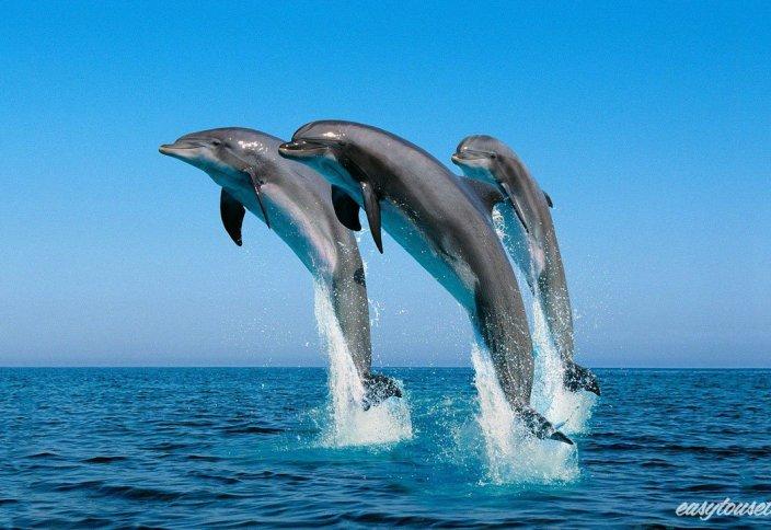 Дельфиндер жайында қызықты деректер