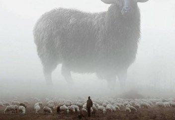 Чабаны на вес золота: пасти скот в Казахстане приглашают людей из-за рубежа (видео)