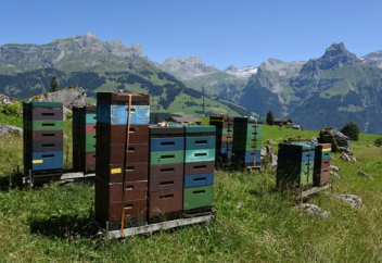 Особенности пчеловодства Швейцарии: Стабильность при отсутствии перспектив развития (фото)