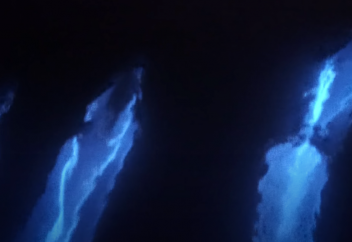 Жарық шашқан дельфиндер таспаға тартылып қалды (видео)