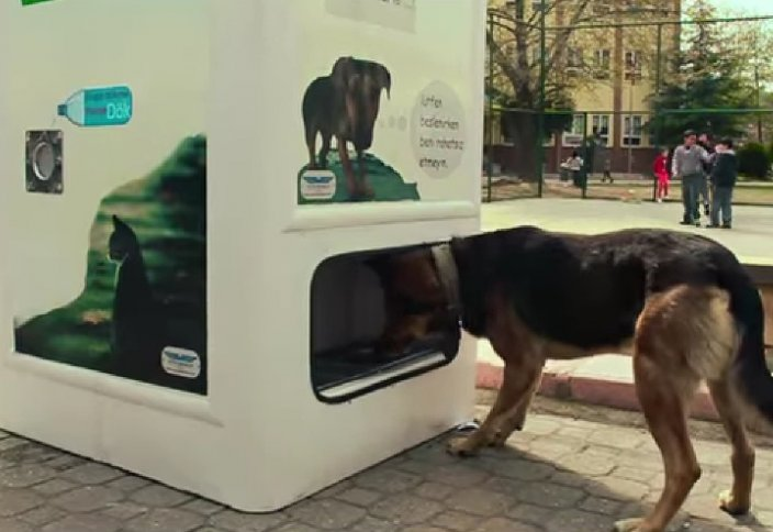 В Стамбуле открыт автомат, который кормит бездомных животных (Фото).