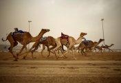 Иордания шөлейтінде түйе жарысы өтті (видео)