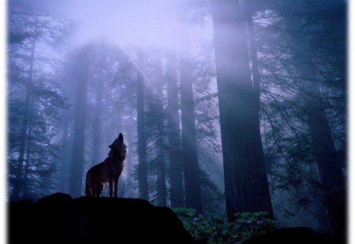 Если ты не волк, будь верблюдом