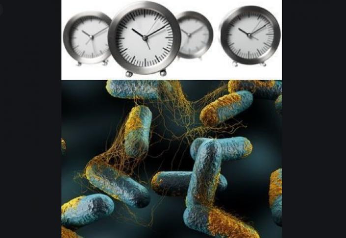 Бактериялардың да адамдардікі секілді «ішкі сағаты» бар болып шықты
