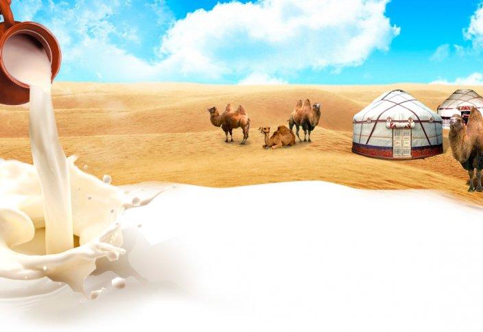 Верблюжье молоко