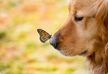 5 бесследно исчезнувших видов животных по вине человека