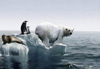 Глобальное потепление заставит животных измельчать, выяснили ученые