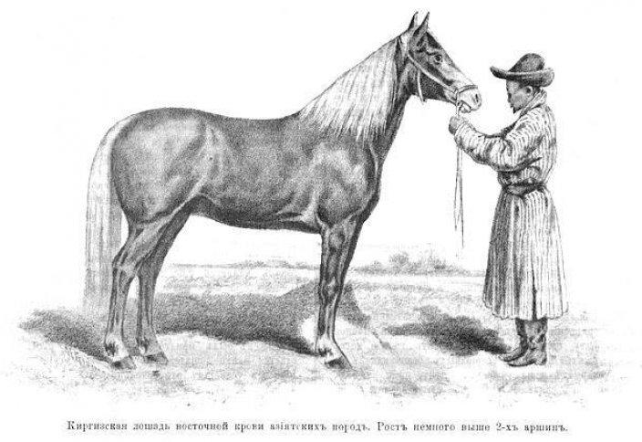 Тюркские национальные породы лошадей