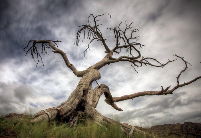 Изменение климата может привести к внезапным потерям биоразнообразия