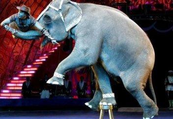 Тағы бір ел жануарларды циркте пайдалануға заң жүзінде тыйым салды